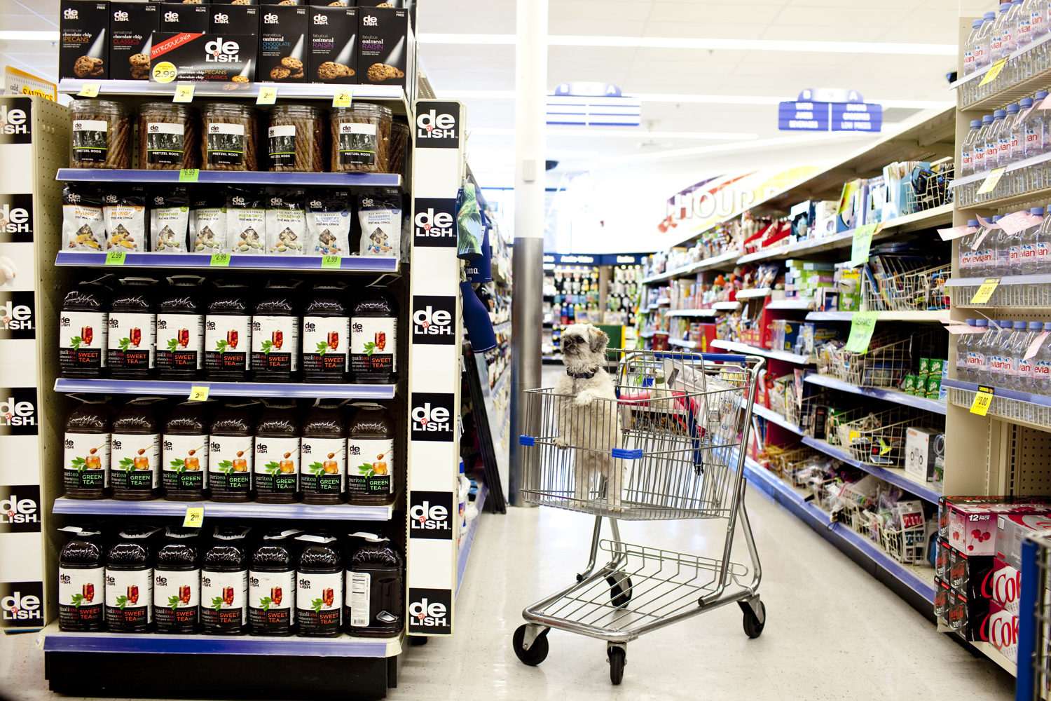 Theresa Gottardo shops in WalGreens with her dog Snoopy in Sun City, Arizona August 24, 2010.
