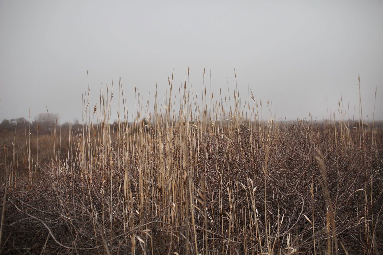 April 11, 2011. Dense brush covers a section of Jones Beach island in Nassau County, N.Y., which is currently being searched by police for human remains. The police have reportedly found two new bodies, bringing the total to 10 found on Long Island. Police believe a single serial killer may be working in the New York area.