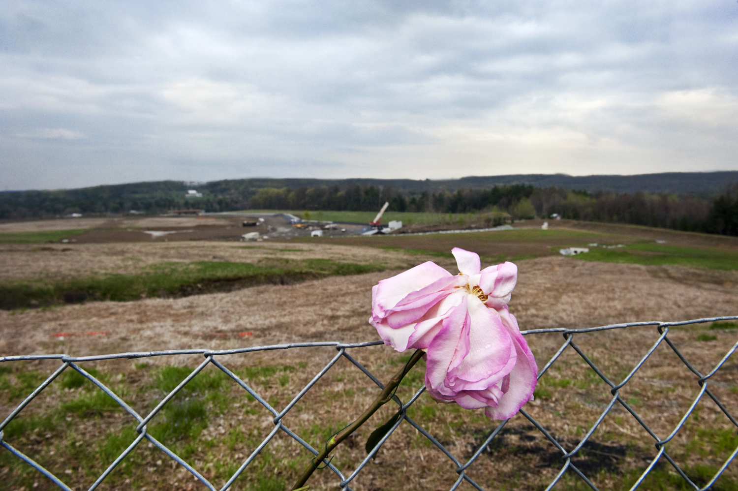 A single flower in the fence at the crash site in Shanksvillle, Pa. the day after Osama Bin Laden was killed by the U.S. military in Pakistan.