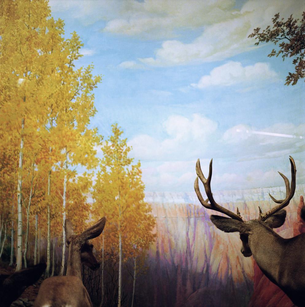 Albrecht and Corwin, Canyon Deer, 2000