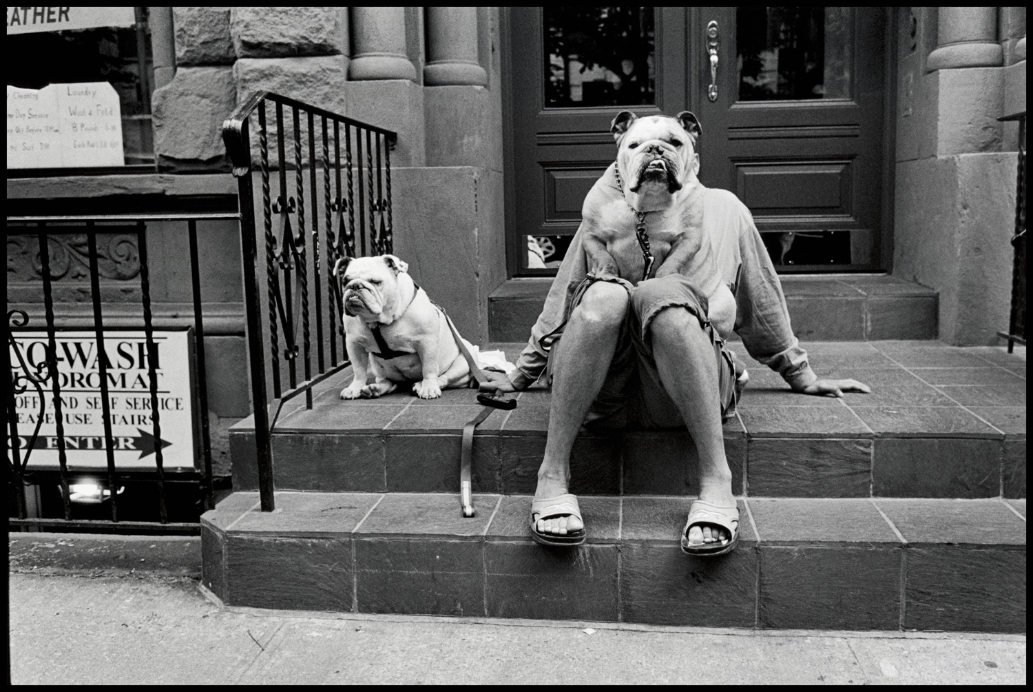 "New York, 2000. ""This popular picture of mine was taken quite recently around the corner from where I live. A dog walker and his two bull dogs. I walk my dog and so I see him often in the park."""
