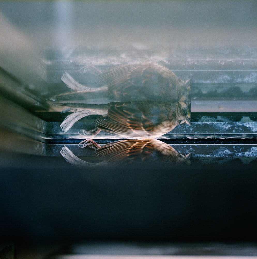 Trapped Bird, 2005