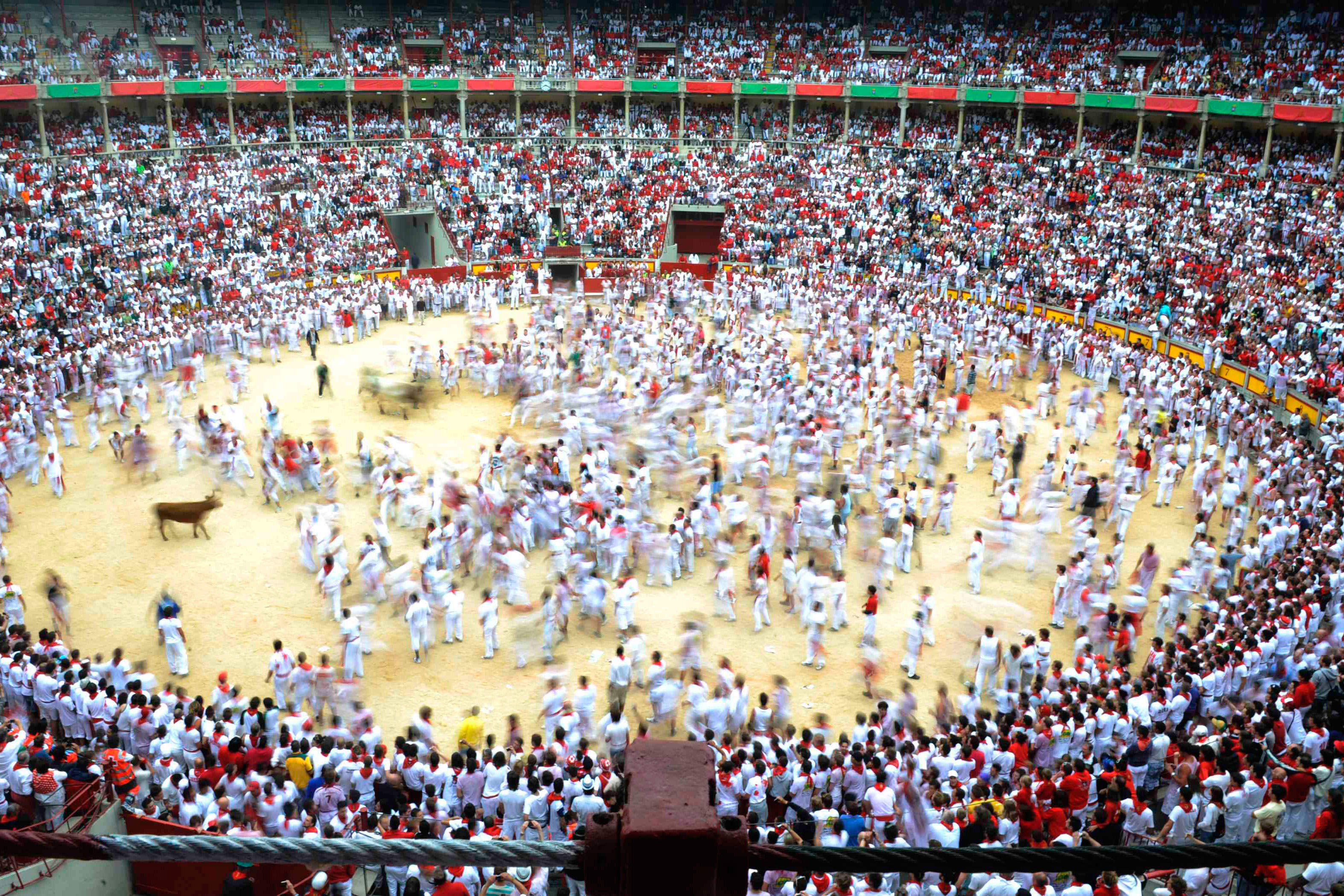 July 7, 2011. A wild cow chases runners at the bullring following the first running of the bulls of the San Fermin festival in Pamplona. Four people suffered minor injuries in the run that lasted two and a half minutes, according to local news sources.