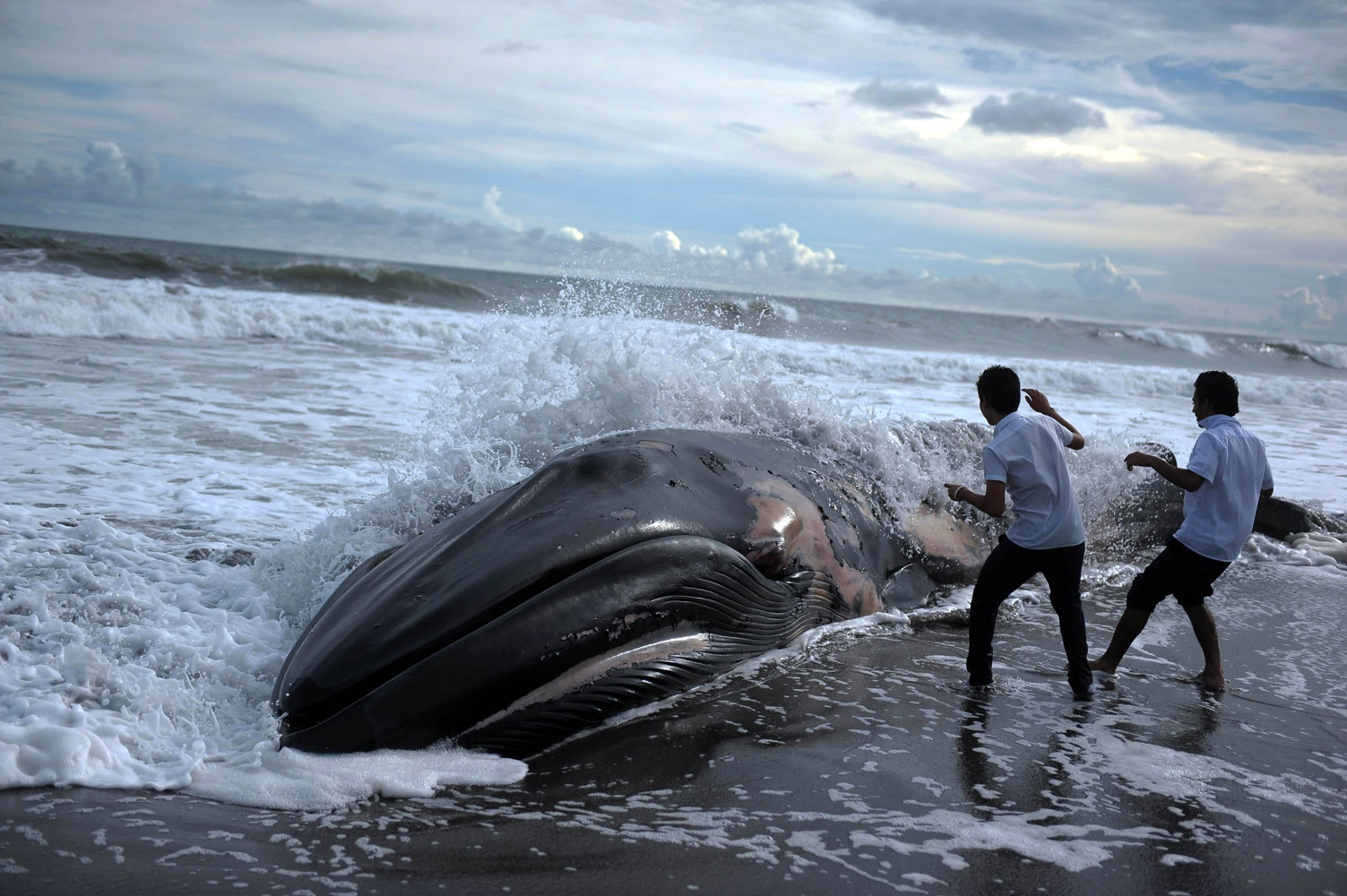 July 4, 2011. Two boys look at the body of a humpback whale at Toluca beach, 50 km south from San Salvador.