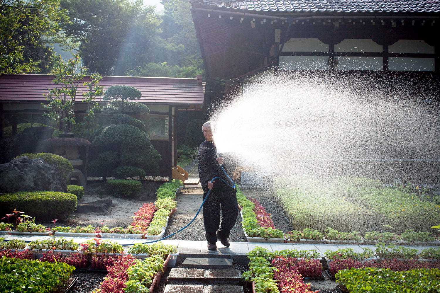 Kouyu Abe tends his garden in Fukushima August 13, 2011. Abe, a Jyoen Temple priest, grows sunflowers and donates them to the community, helping decontaminate radioactive soil.