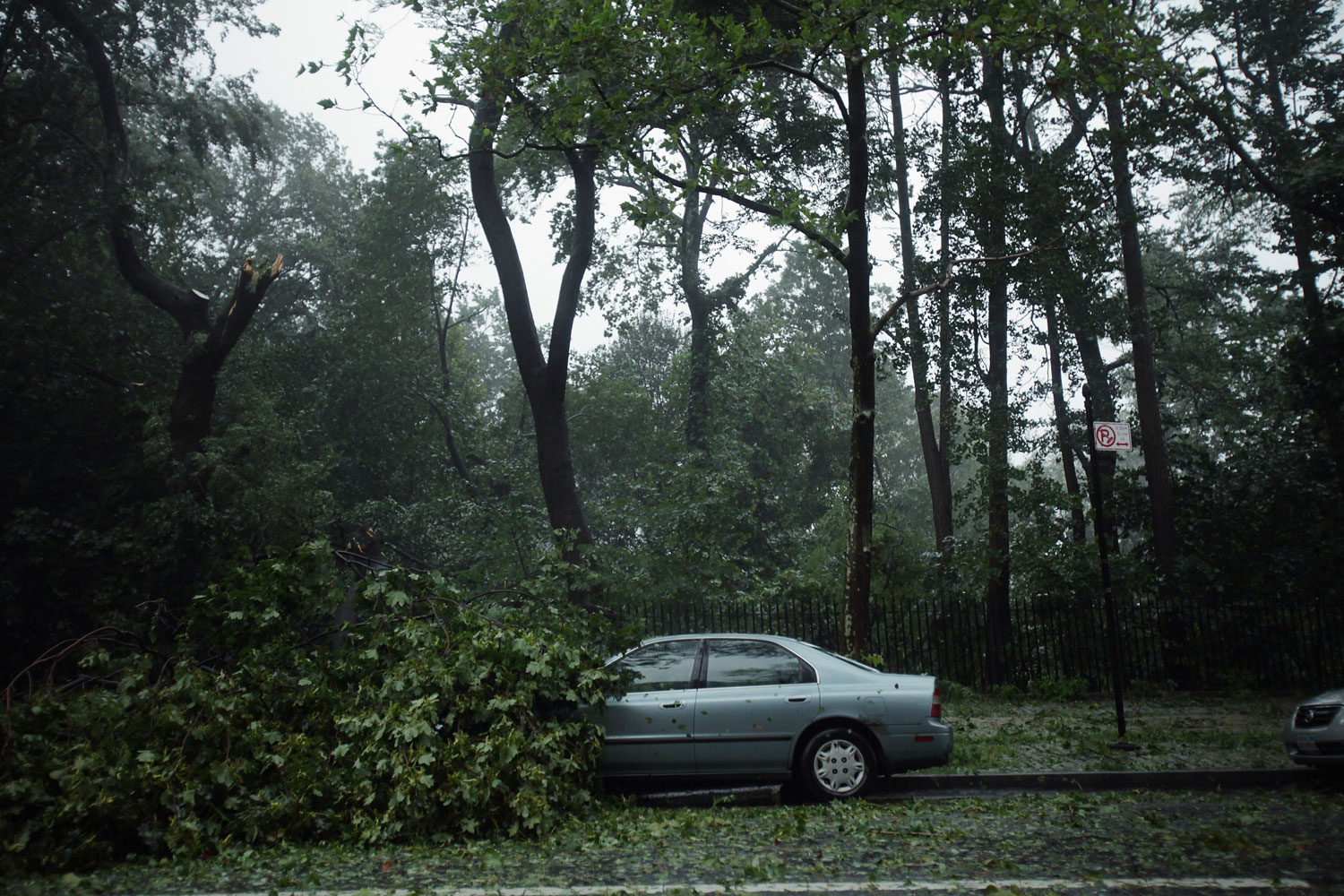 August 28, 2011, Brooklyn, NY. Downed trees lie on the street during heavy rain and winds from Hurricane Irene in New York City. While Hurricane Irene has now been downgraded to a tropical storm, it has knocked out power to more than 3 million people and is attributed to 10 deaths as it travels up the Eastern seaboard.