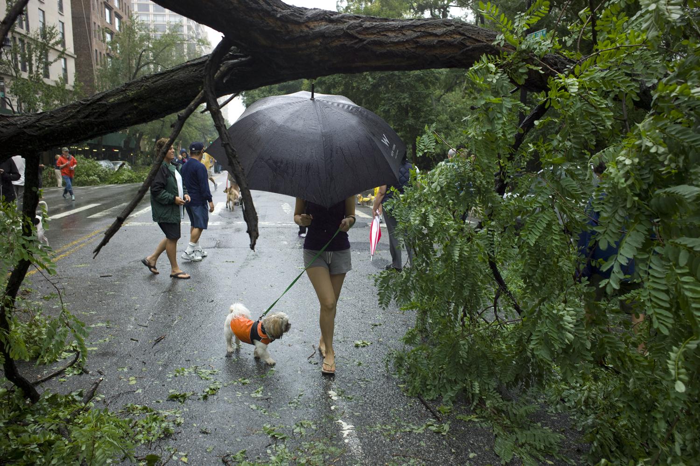 August 28, 2011, New York, NY. Pedestrians walk around fallen trees near City Hall in downtown Manhattan.