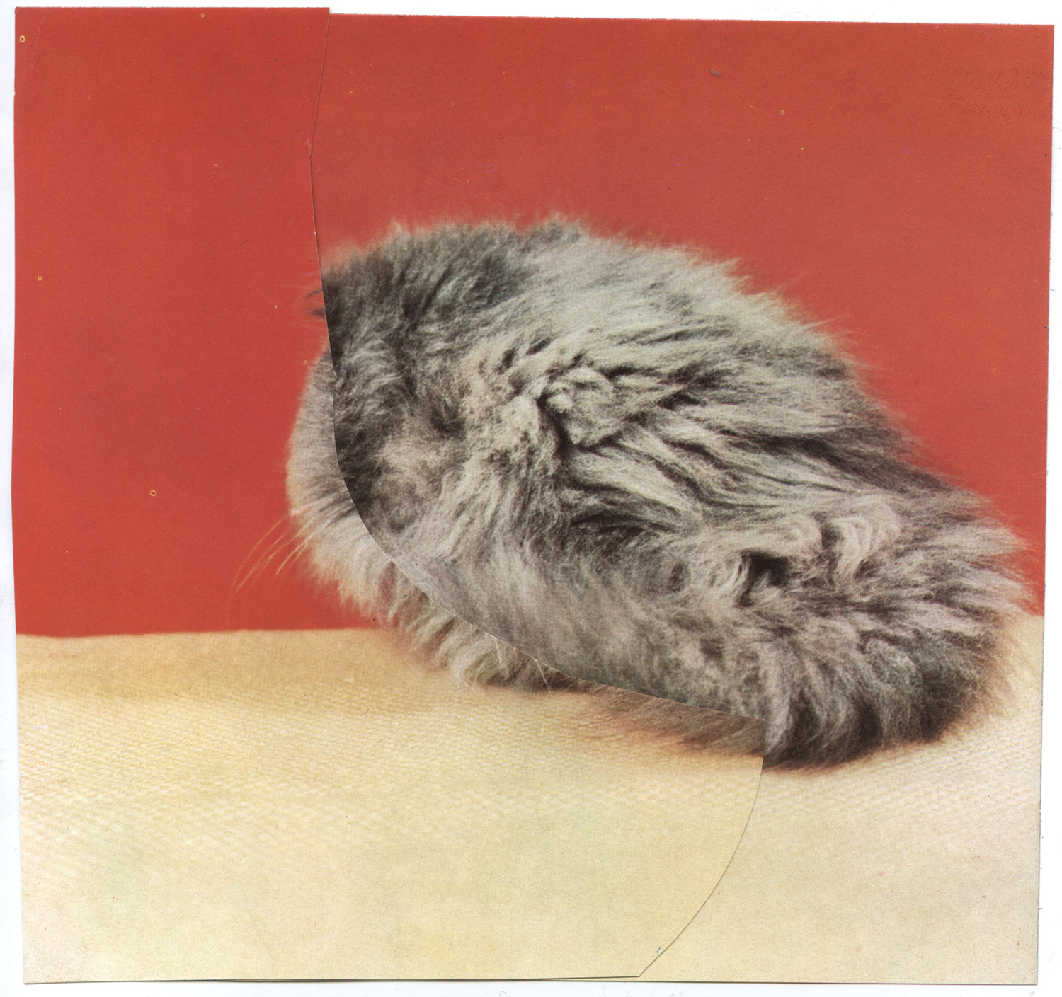 Untitled (Silver Tabby) Collage, 2010