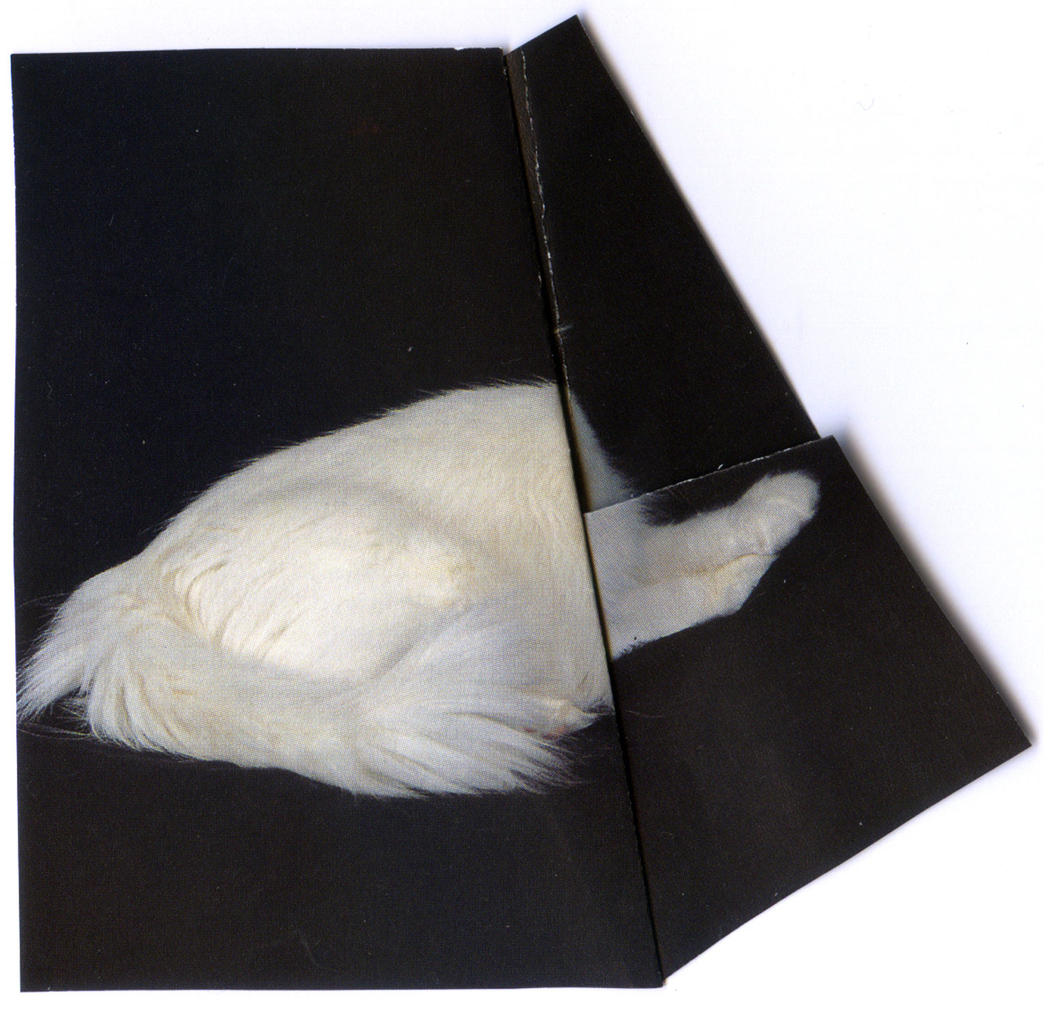 Untitled (White) Collage, 2011
