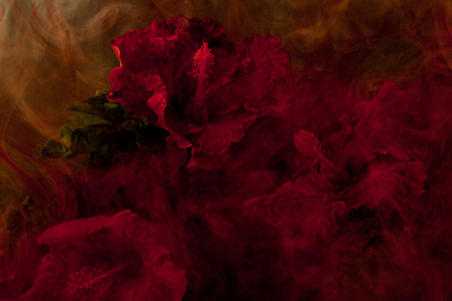 2011, Untitled, from the series Stamen