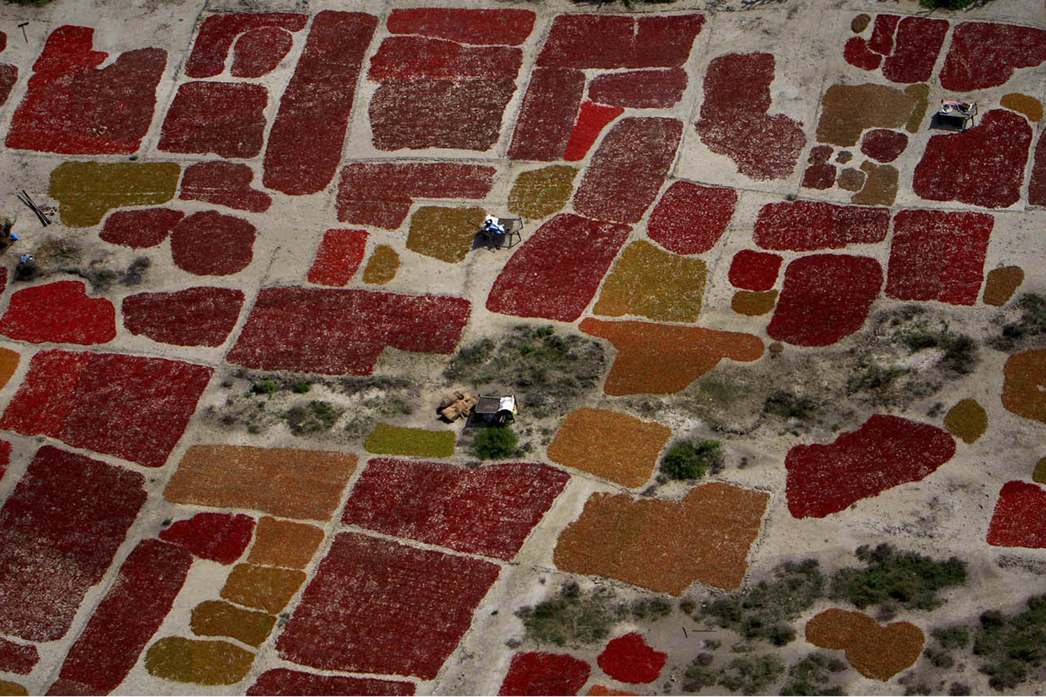 September 27, 2011. In this aerial photo, flood-affected farmers dry chili crops on high ground in the Umerkot District of Pakistan's Sindh province, where floods have killed over 200 people, damaged or destroyed some 665,000 homes and displaced more than 1.8 million people. Neighboring Baluchistan province has also been affected.