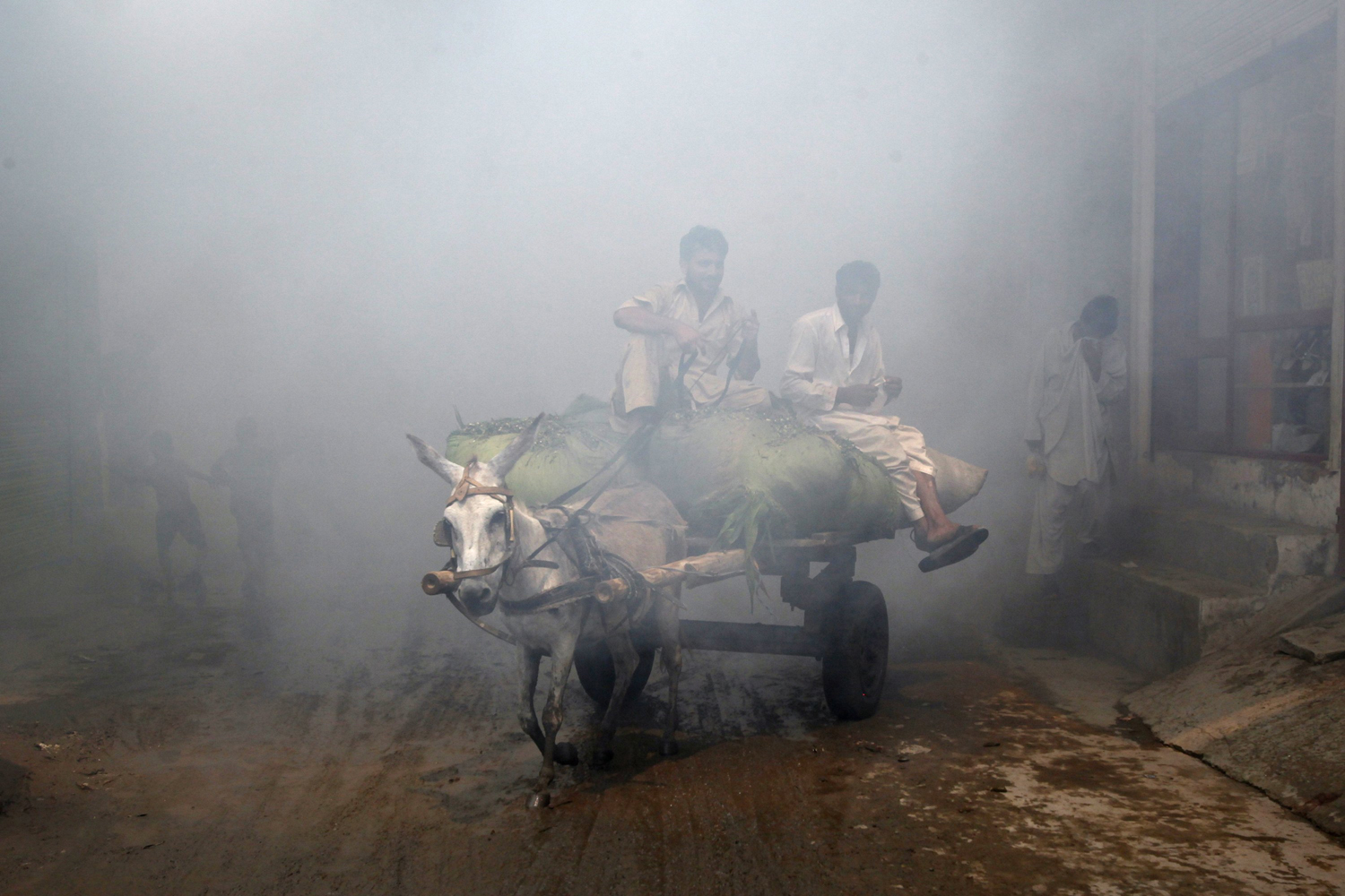 September 9, 2011. Men ride a donkey cart through vapor after the area was fumigated in the outskirts of Lahore. Cities across Pakistan launched a fumigation campaign to eliminate mosquitoes and control breeding to protect citizens from dengue fever.