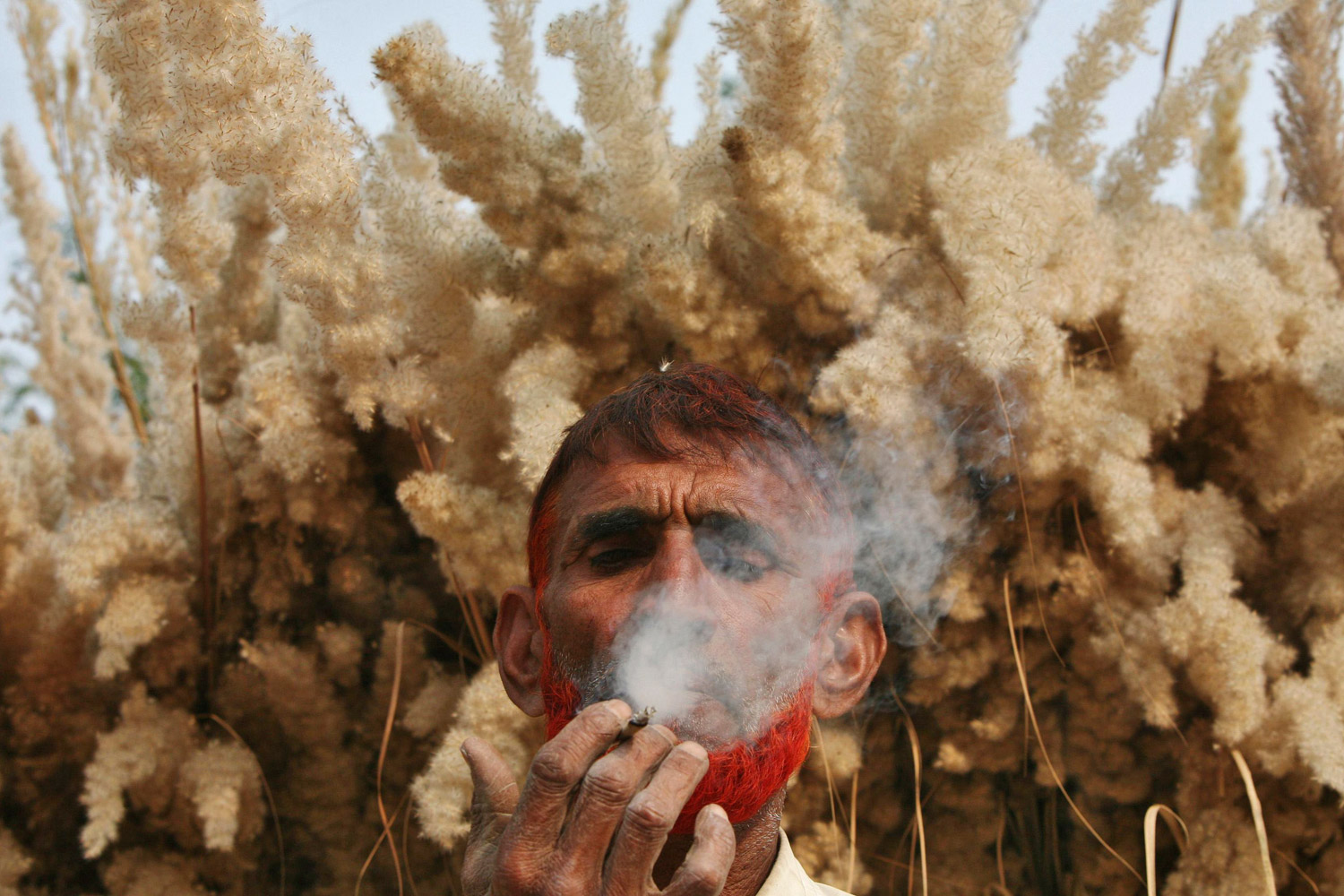 November 22, 2011. Farmer Noor Din, 53, smokes a bidi, or an Indian leaf cigarette, in front of saccharum grass on the outskirts of Jammu.