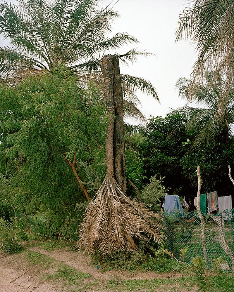 Depressive Palmtree, 2011