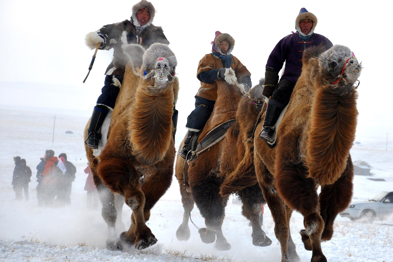 December 2, 2011. Mongolian tribesmen take part in a camel race during the winter Naadam festival in Hulun Buir, north China's Inner Mongolia region, in the latest event to promote tourism in the cold winter months.
