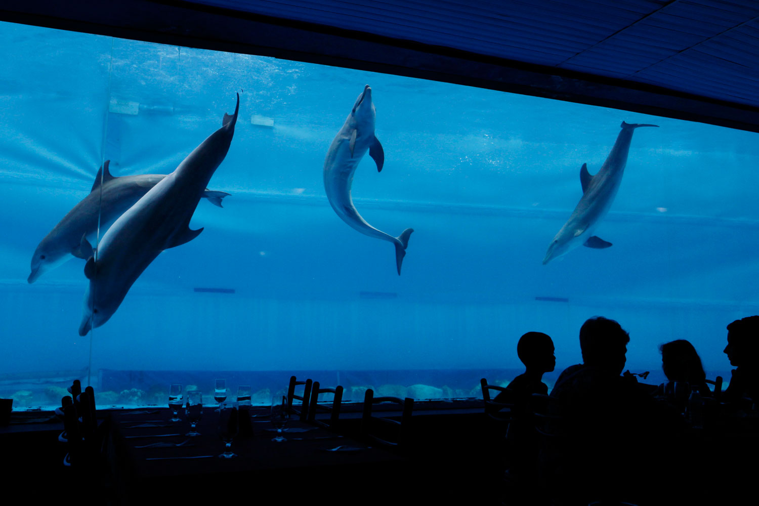 July 5, 2011. Dolphins perform at Cuba's National Aquarium in Havana. When the aquarium was opened in 1960, it consisted of 13 small-volume fishbowls. It now has a tank in which up to eight trained dolphins can put on ashow.