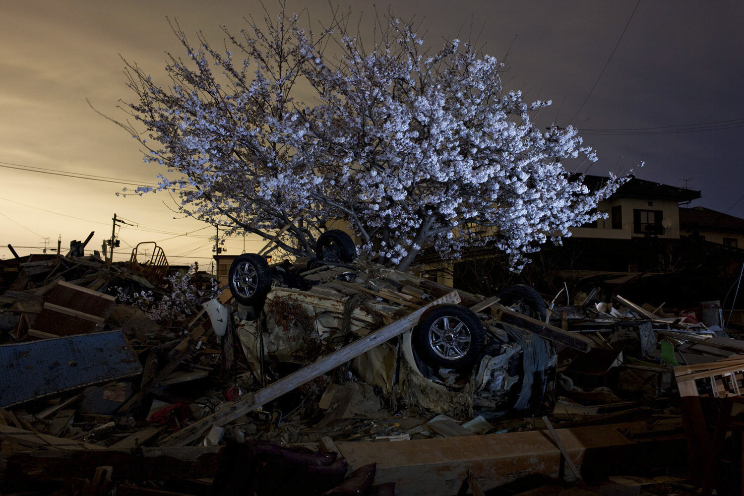 April 18, 2011. Cherry blossoms cover a tree in an area destroyed by the March earthquake and tsunami in Natori, Japan.