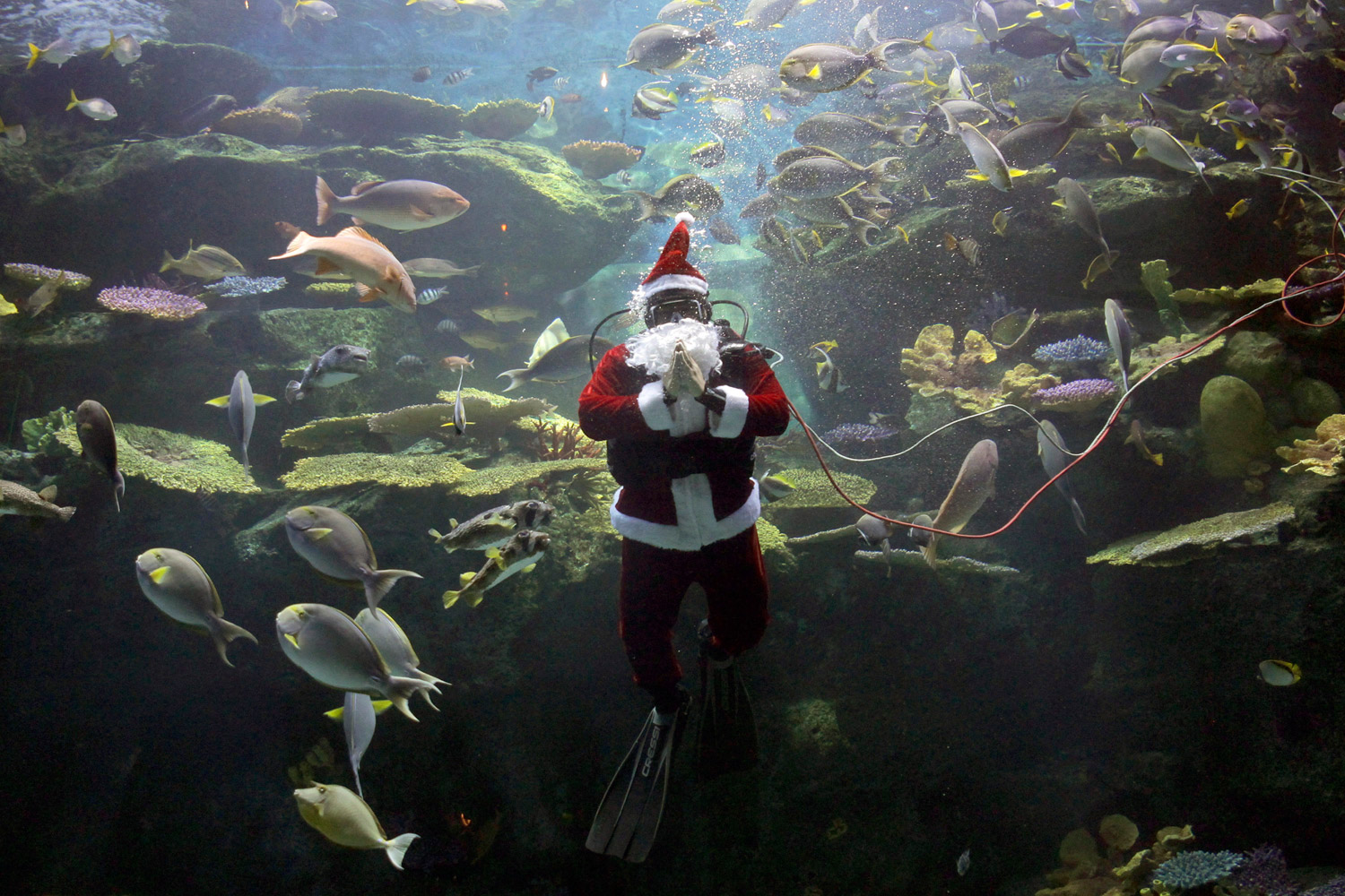 December 2, 2011. A worker in scuba gear dressed as Santa Claus greets spectators during an aquarium show in Bangkok. Though most of its people are Buddhists, Thailand celebrates Christmas as a festival—often with Santa.