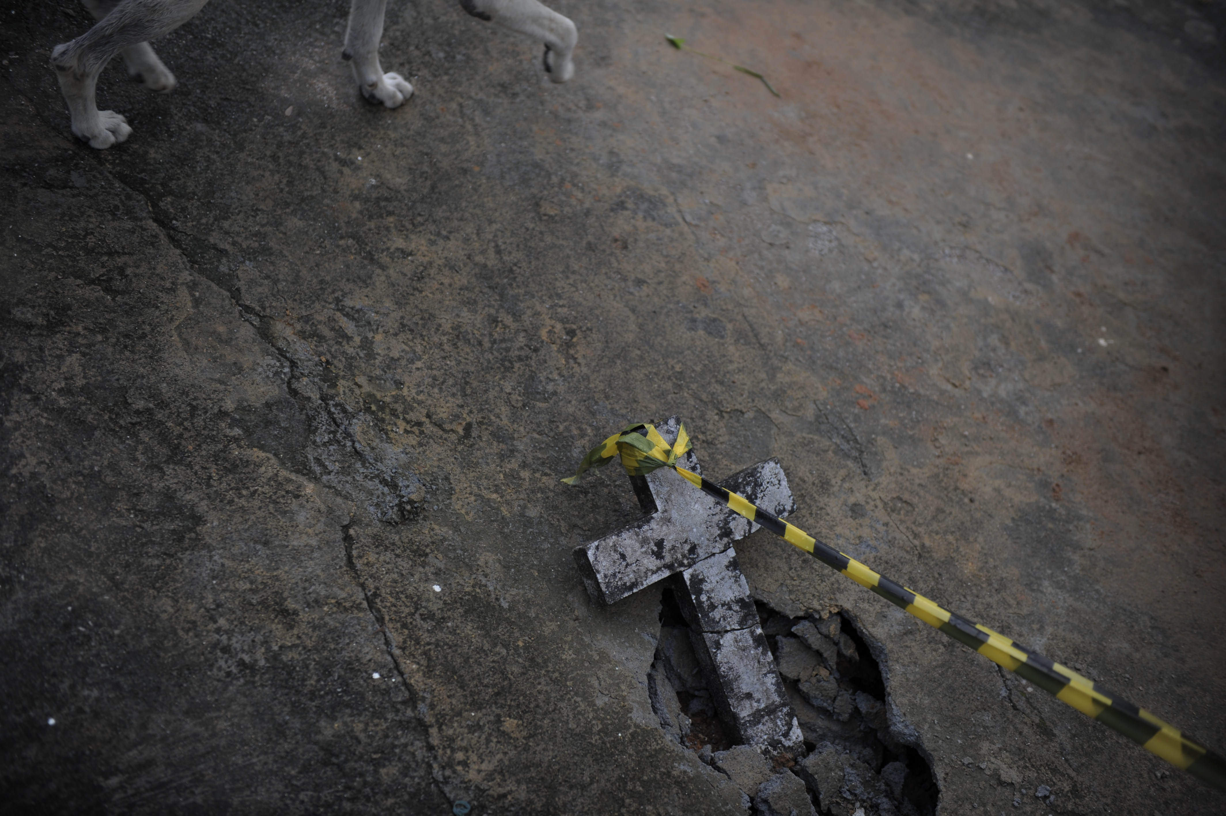 January 17, 2011. A dog walks by a cross on the ground at a cemetery in central Nova Friburgo, Rio de Janeiro, Brazil. The death toll from devastating floods and landslides reached 640.