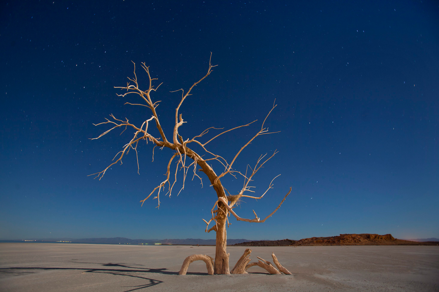 January 20, 2011. A dead oak tree glows under a full moon in a salt pan on the southern end of the Salton Sea near Niland, California. Erosion and high toxicity levels from farm runoff has left the Salton Sea increasingly contaminated, and lake-side towns all but deserted.