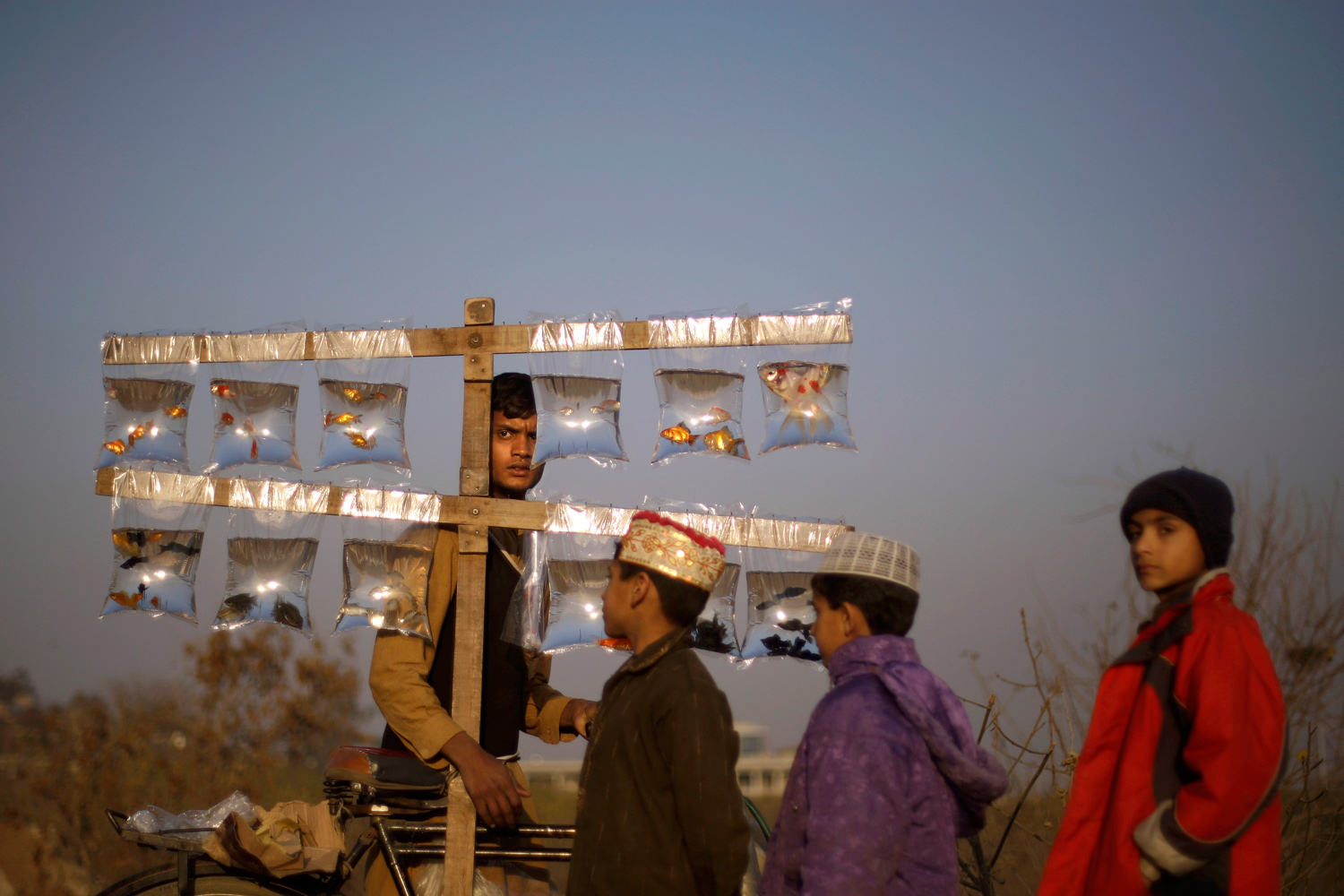 January 26, 2011. Pakistani boys gather by a vendor selling tropical fish on his bicycle on the outskirts of Islamabad, Pakistan.