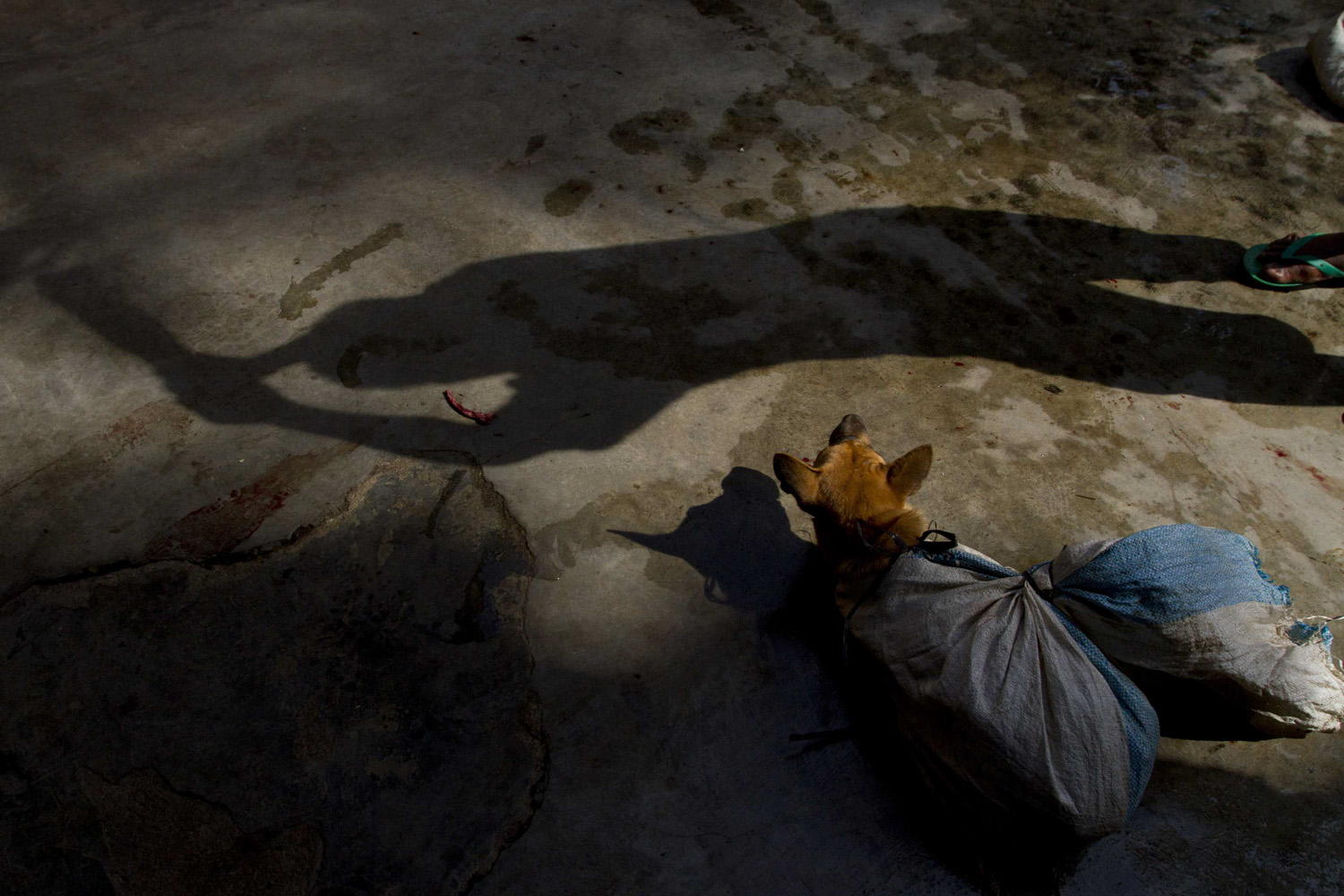 May 29, 2011. The shadow of a worker using a stick to club a dog before slaughter is seen, at Bambanglipuro village in Bantul, near the Indonesian city of Yogyakarta.