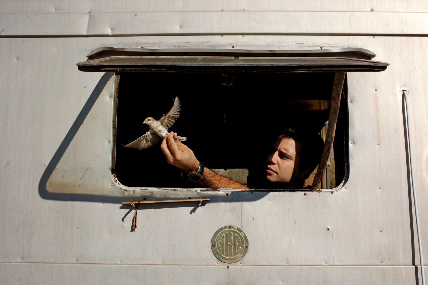 October 2, 2011. Ornithologist Cagan Sekercioglu prepares to release a songbird after collecting data and placing a metal tracking bracelet on its foot.
