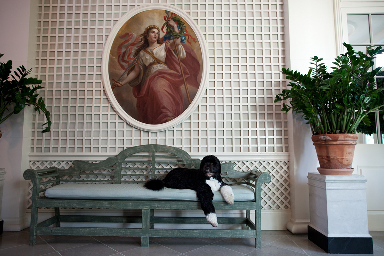 September 15, 2011. Bo, the Obama family dog, lounges in the West Garden Room of the White House.
