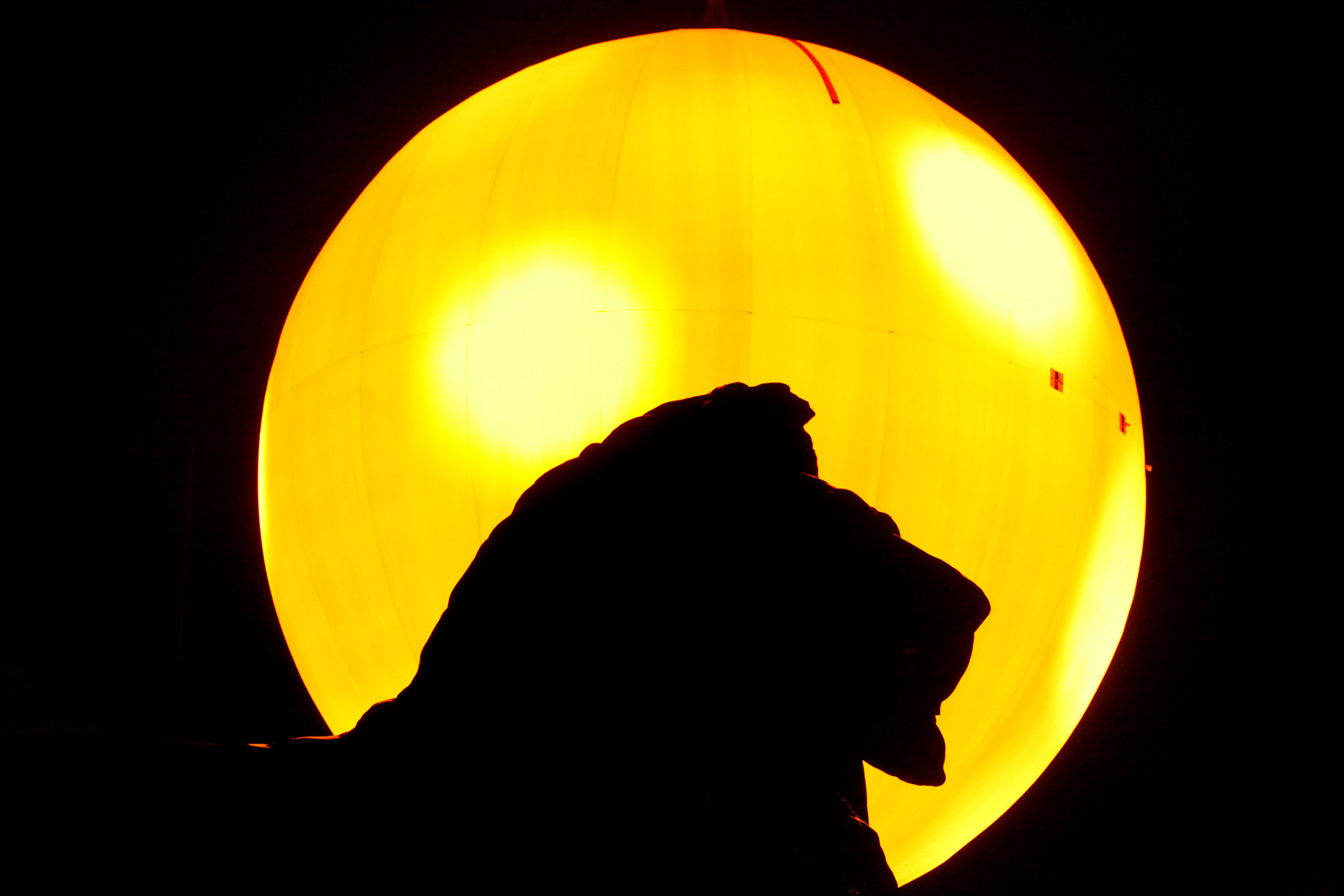 January 23, 2012. A bronze lion at the base of Nelson's Column is silhouetted against the backdrop of a 'fake sun' in London's Trafalgar Square. The luminous orb, which took six months to build, weighs over 2,500 kgs and produces the equivalent light to 60,000 light bulbs. The artwork was designed by the art collective Greyworld and is in Trafalgar Square for one day only.