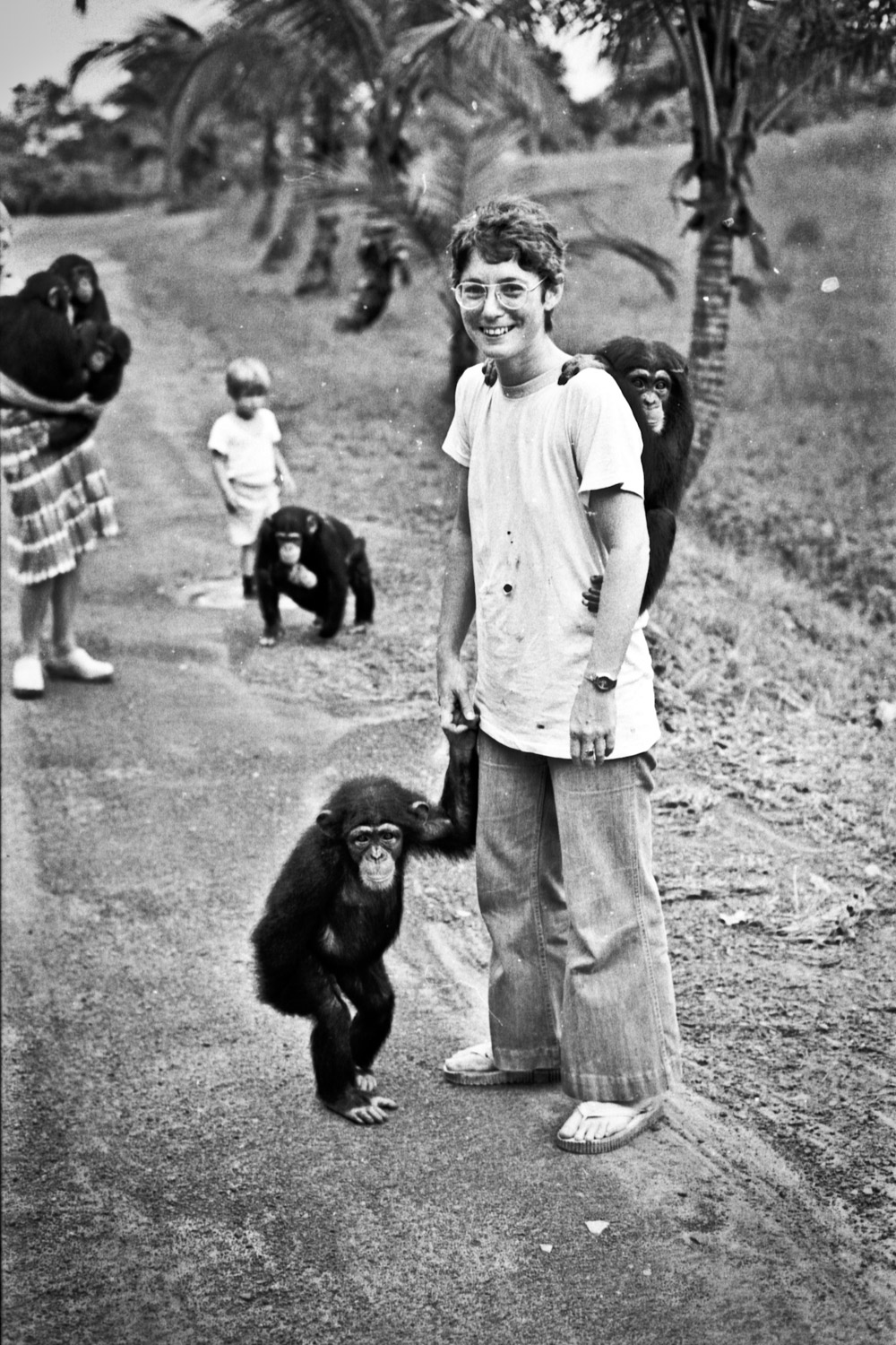 Betsy Brotman and chimps at Vilab at the Liberian Institute for Biomedical Research, where Evelyn came from. Charlesville, 1978.
