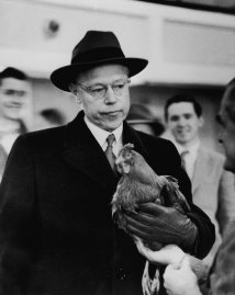 Republican presidential candidate Robert Taft, a U.S. Senator from Ohio, appears dismayed as he holds a rooster during his 1952 primary campaign.