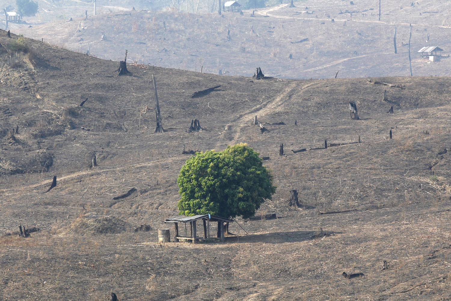 Feb. 24, 2012. Because of slash and burn practices, one green tree is left amongst hills of burnt out brown and deforested land, near Mae Chaem, northern Thailand.