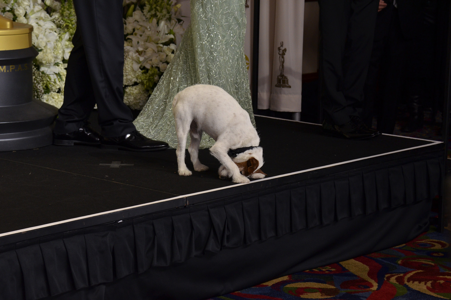 Feb. 26, 2012. Uggie the dog from The Artist poses in the press room at the 84th Annual Academy Awards in Hollywood, Calif.