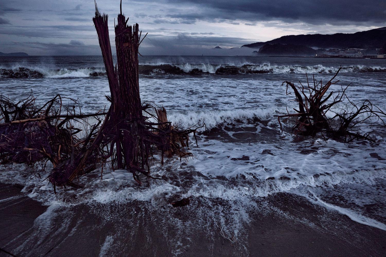 Feb. 23, 2012. Rikuzentakata, Japan. Shattered stumps of trees at the edge of the sea.