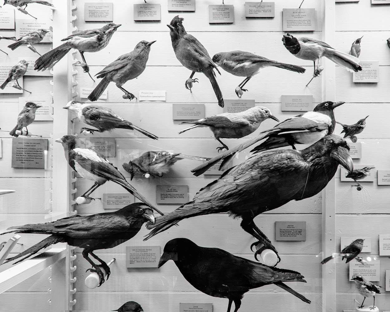 North American Birds Exhibit, 2010