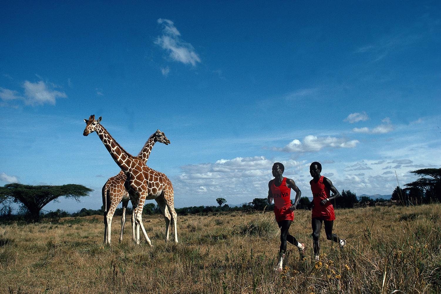 Kenya marathon runners Kipkoech Cheruiyot and Charles Cheruiyot run next to giraffes in Nanyuki, Kenya.