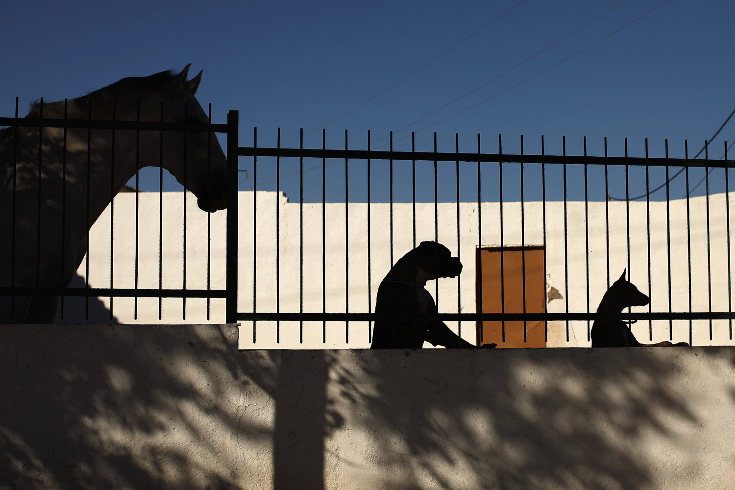 Aug. 15, 2012. A horse, a boxer dog and a podenco dog are silhouetted in Marinaleda, southern Spain.