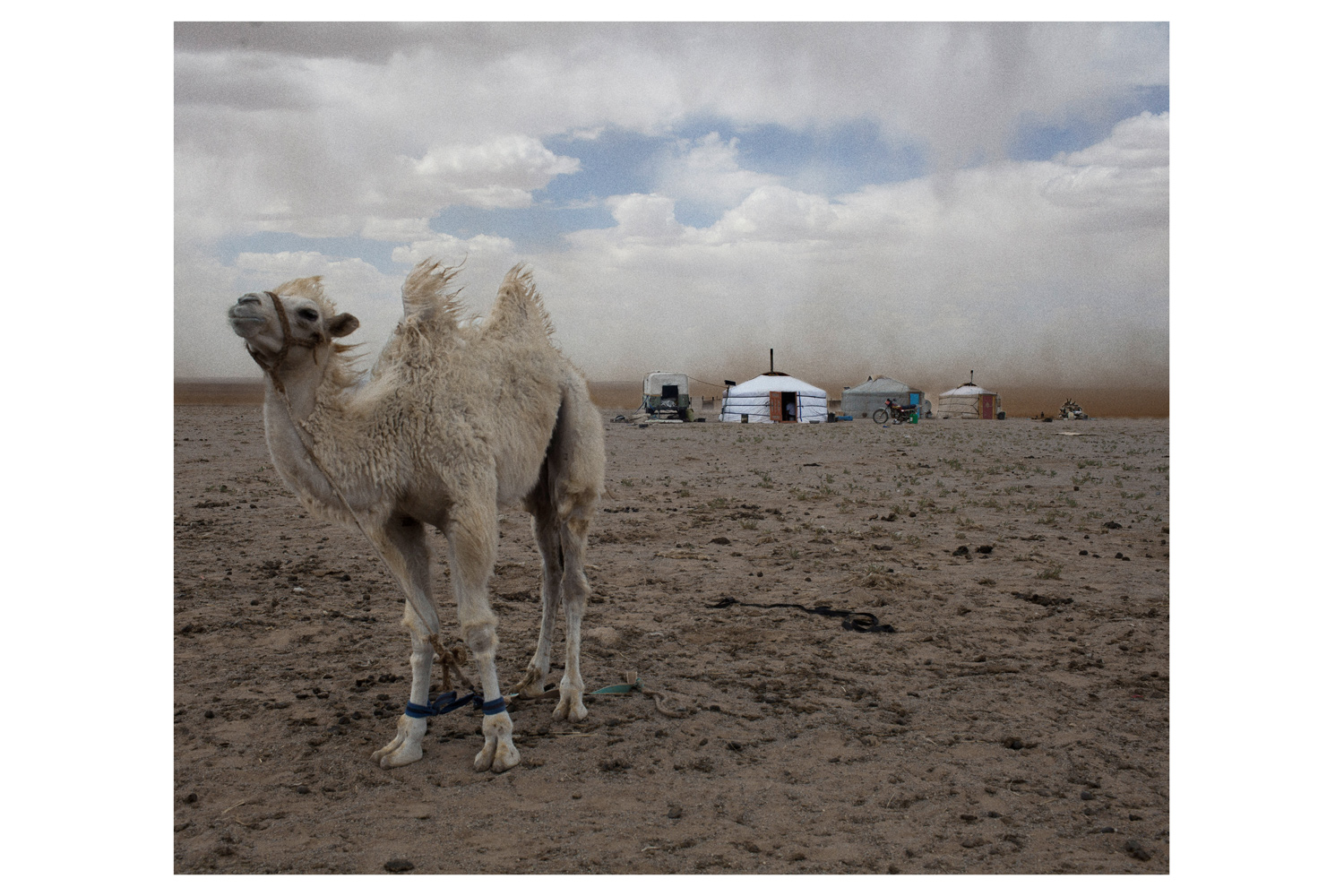 All photographs were taken in June, 2012.                               Mongolia is the most sparsely populated country on the planet, yet it is also, by some estimates, the world's fastest growing economy.