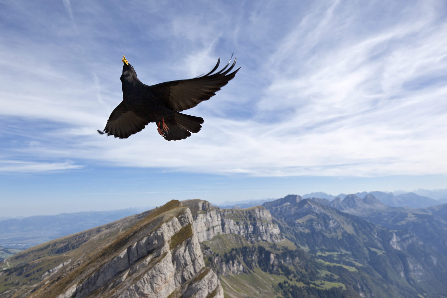 Sept. 18, 2012. A Pyrrhocorax graculus (Bergdohle) flies above Wildhaus in the Grisons, Switzerland.