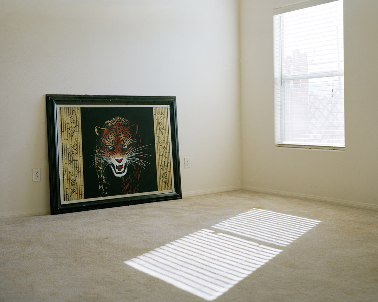 Exotic Tiger, 2010