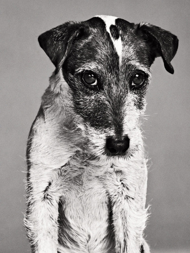 Uggie, Jack Russell Terrier. From  Great Performances,  February 20, 2012 issue. Performance: The Artist.