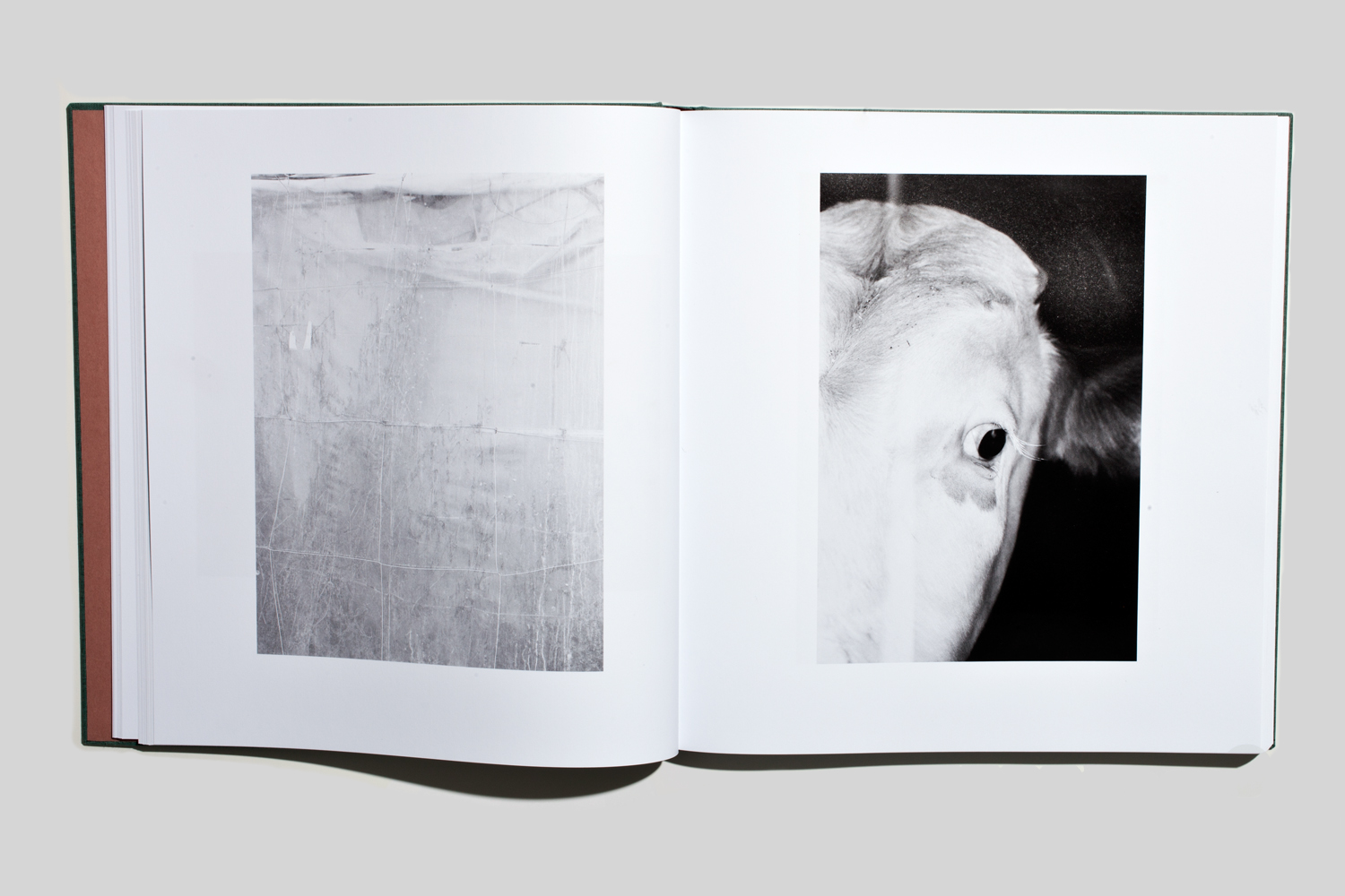 Clothbound and slipcased, Michael Schmidt's photobook Lebensmittel (Snoeck Verlag, Cologne, 2012), which roughly translates as food or foodstuff, is exceptional. In over 170 arresting pictures (no text)—shot in abattoirs, bulk bakeries, apple washing plants, dairy farms and fish banks—Lebensmittel is a signature examination of the industrialized global food economy. Impeccably paginated, Schmidt's critical sequencing of pictures reveals the subject at close range: freshly sliced sausage products, French fries tumbling from greased griddles, fish frozen into blocks of ice, the cropped head of a dead cow, and infrared-looking tomatoes. Schmidt adopts the productive model of 1920s sachlichkeit (objective) photography. Yet, it is precisely the contrast between the utopian position of his predecessors, who presented the industrial motifs in a 'beautiful world' aesthetic, that makes Schmidt's book particularly relevant. There is no question that Schmidt, whose earlier book EIN-HEIT (Scalo, 1996) remains a classic, is one of the outstanding artists of German photography.                                                               —Roxana Marcoci, Curator, The Museum of Modern Art, New York
