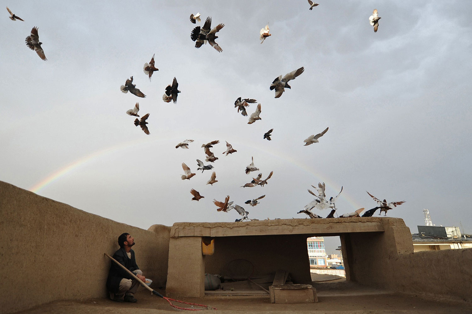 Withdrawl From Afghanistan                                Feb. 19, 2012. An Afghan man watches pigeons on the roof of his house as a rainbow forms in the background in Mazar-i Sharif, Afghanistan.