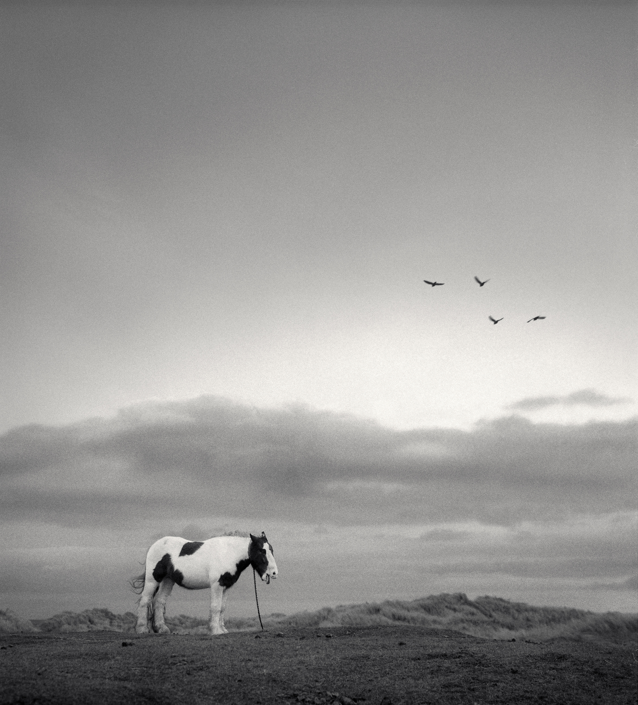 Lonely horse, England, 1998