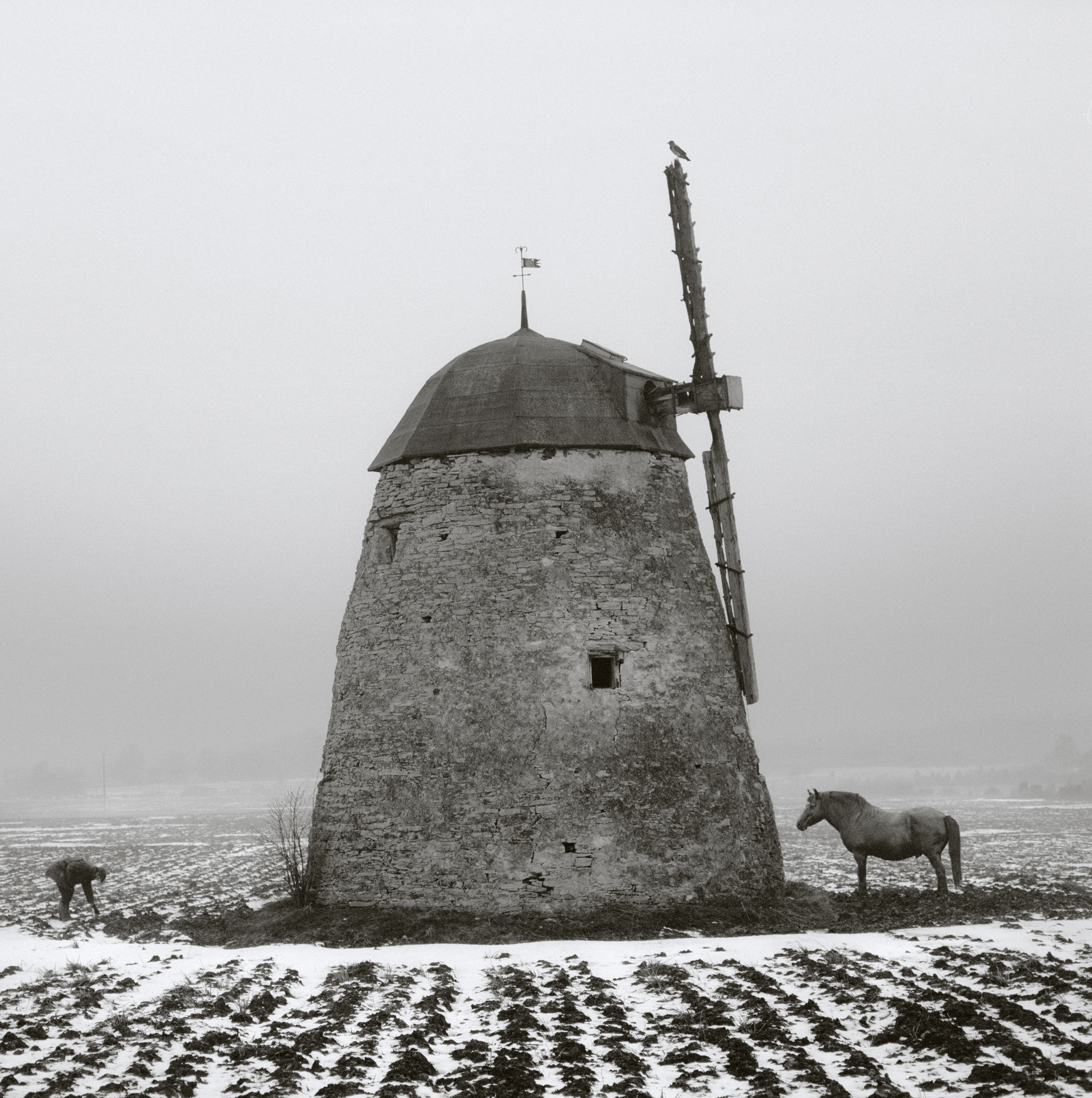 Horse and windmill, 1982