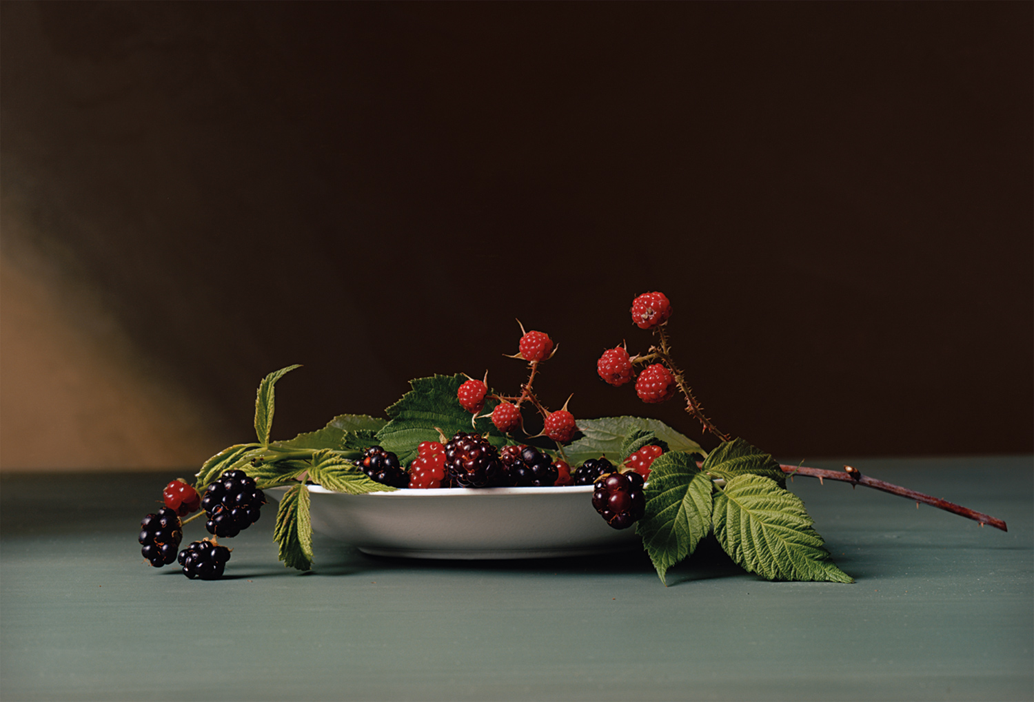 Plate 2 - Blackberries
