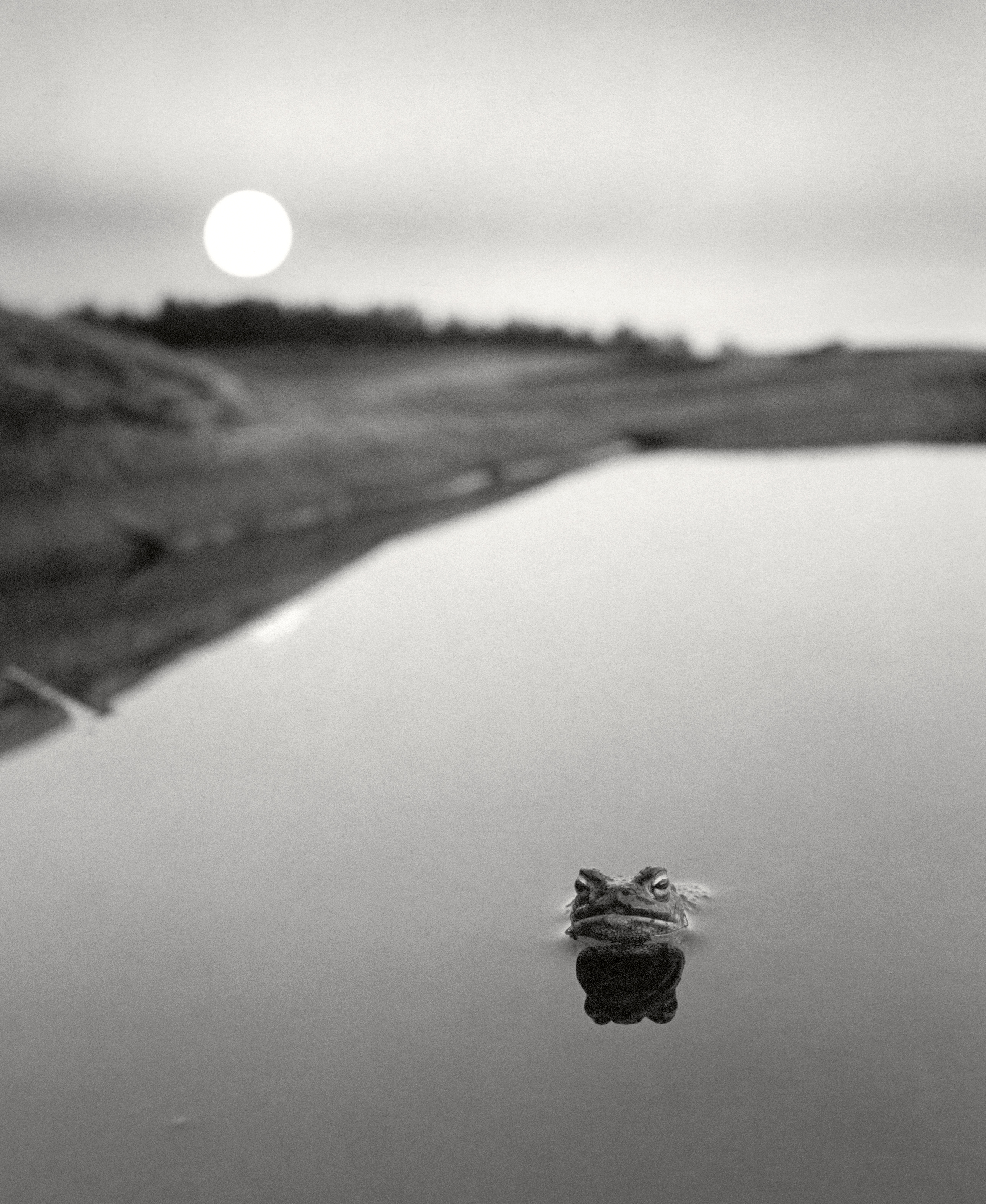 Frog in water, 1974