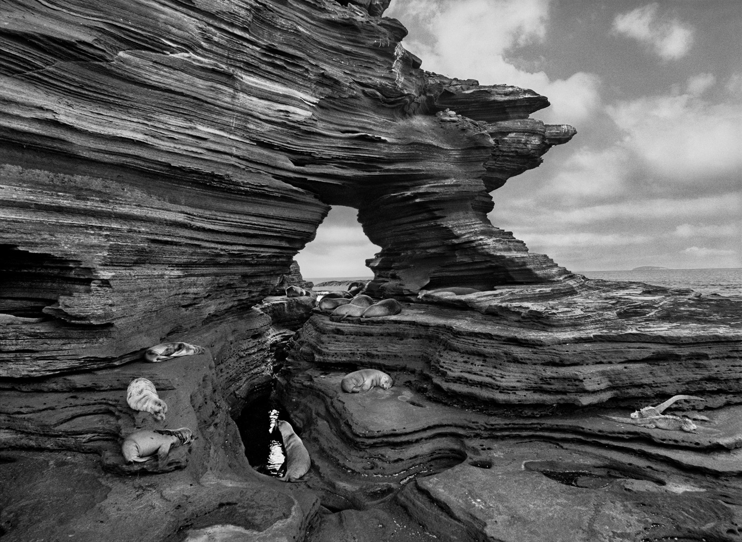 Sea lions rest on shelves of compacted volcanic ash on Santiago Island, part of the Galapagos chain made famous by Charles Darwin.
