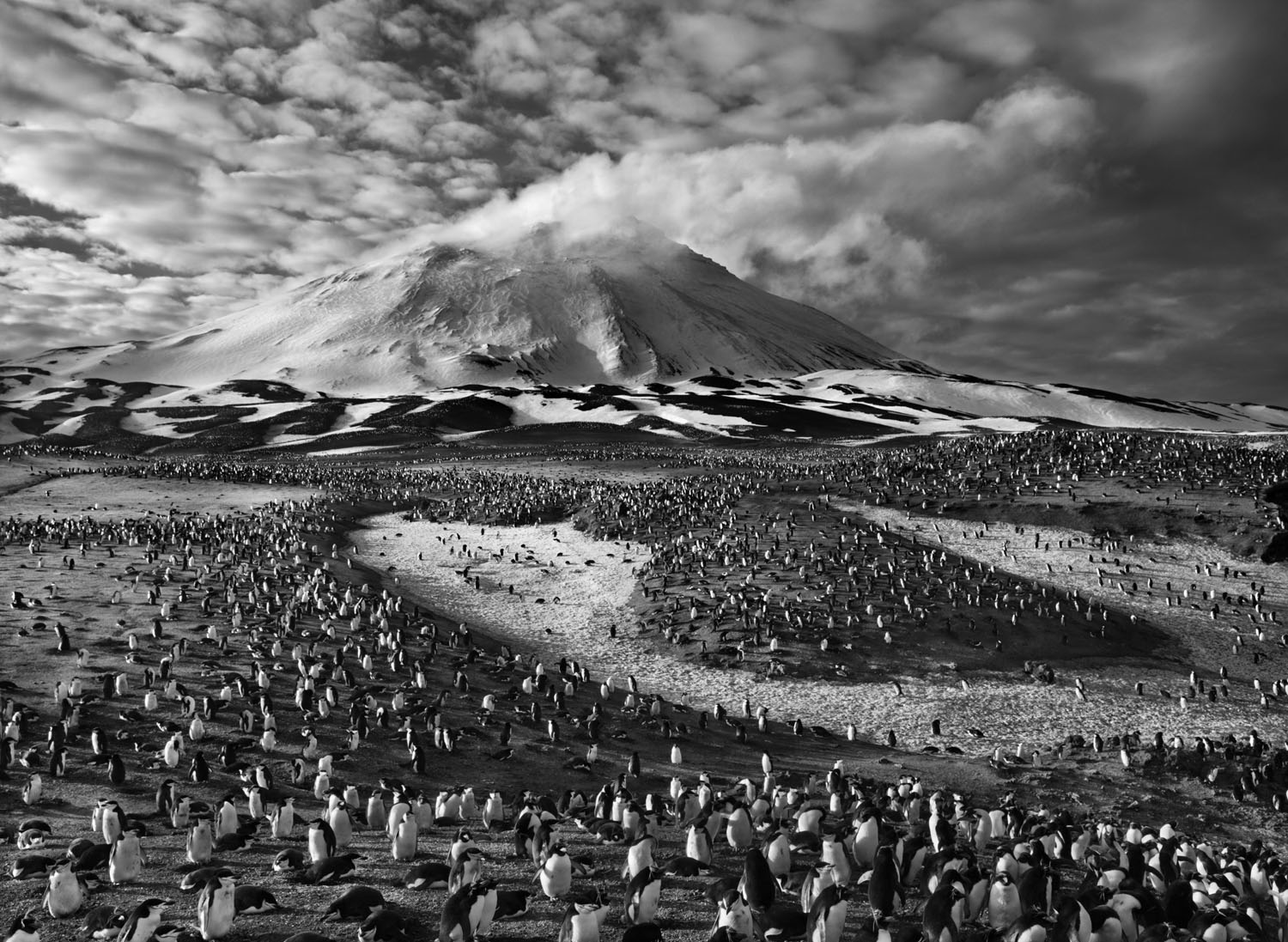 The earth's largest concentration of penguins inhabits tiny Zavodovski Island, one of the nine volcanic islands in the South Sandwich chain, in the far South Atlantic. A 1997 survey estimated that it's home to about 750,000 chinstrap penguin couples as well as a large colony of macaroni penguins. The island's active volcano is visible in the background.