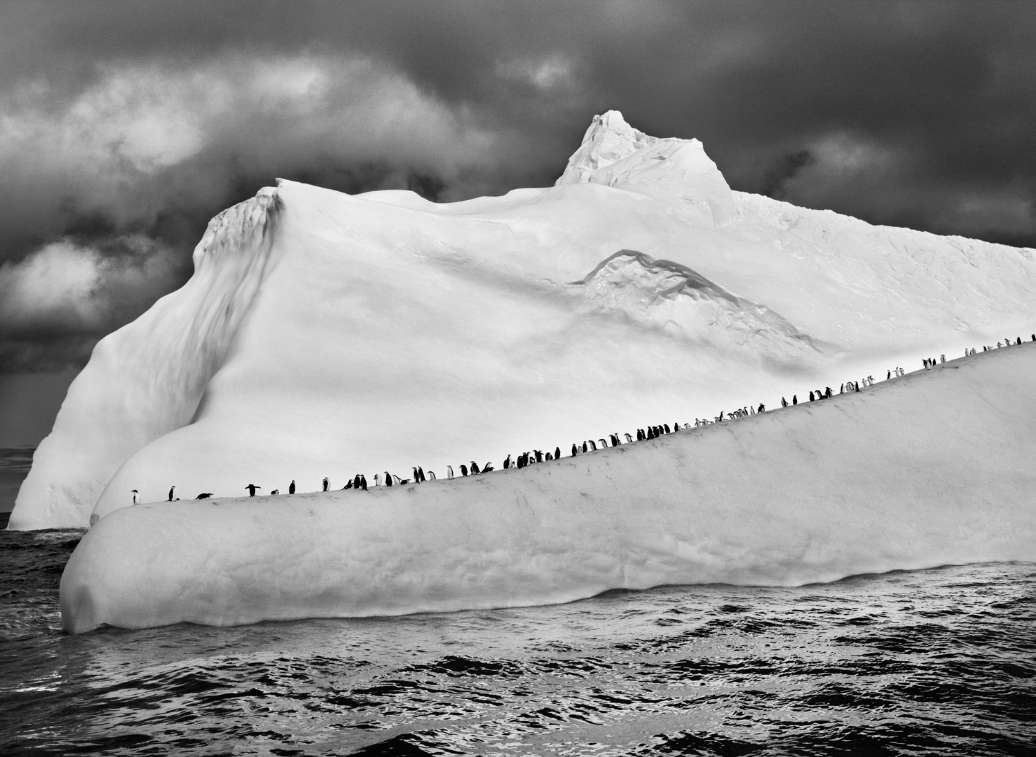 Chinstrap penguins line up along an iceberg as it floats among the South Sandwich Islands in the far South Atlantic.